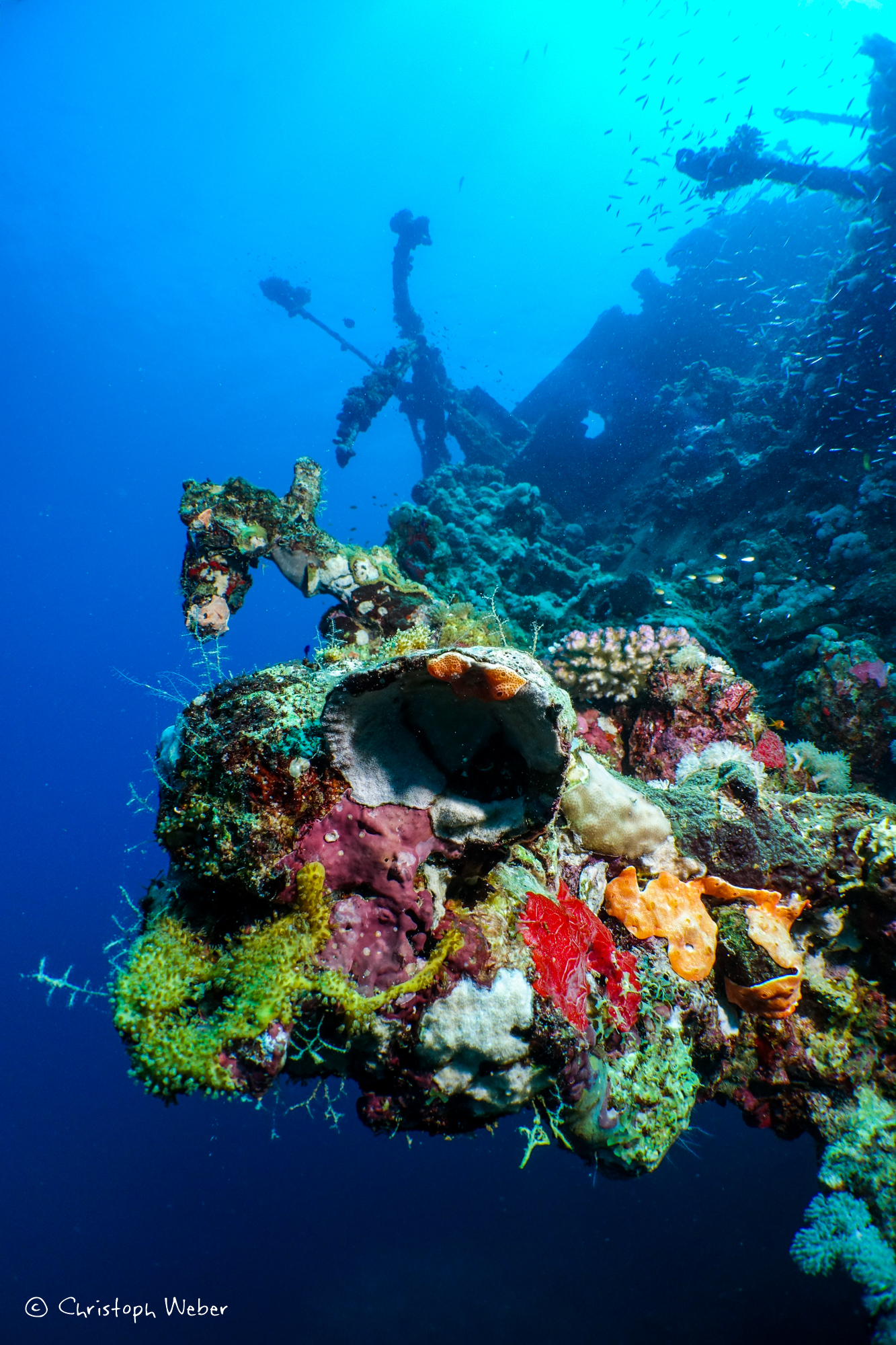 Explosion of colours on Umbria Wreck
