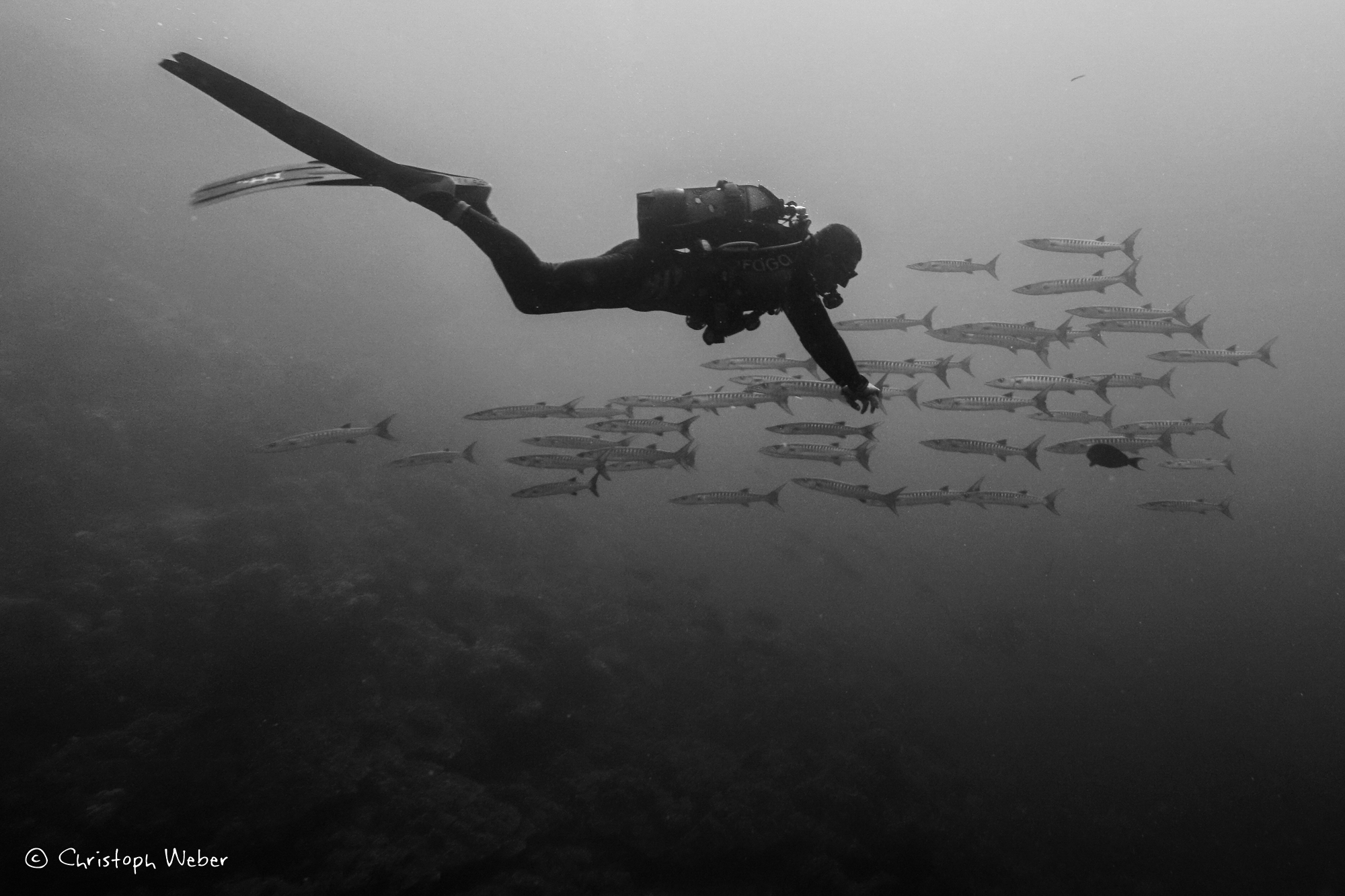 Scuba diver and barracuda silhouettes - Black and White pic