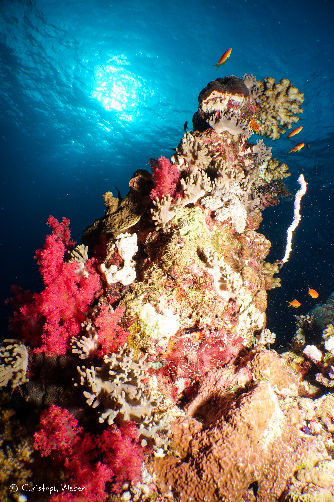 Red and Blue - Underwater landscape