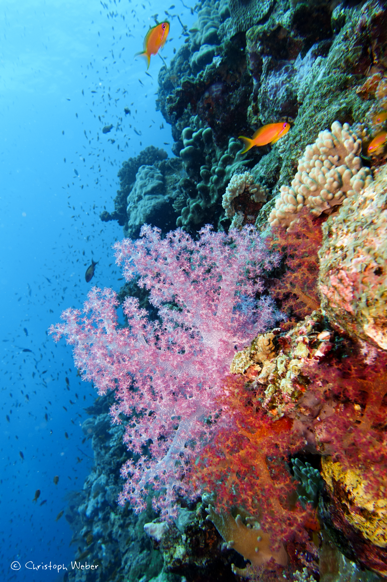 Soft colours... Pink Soft coral