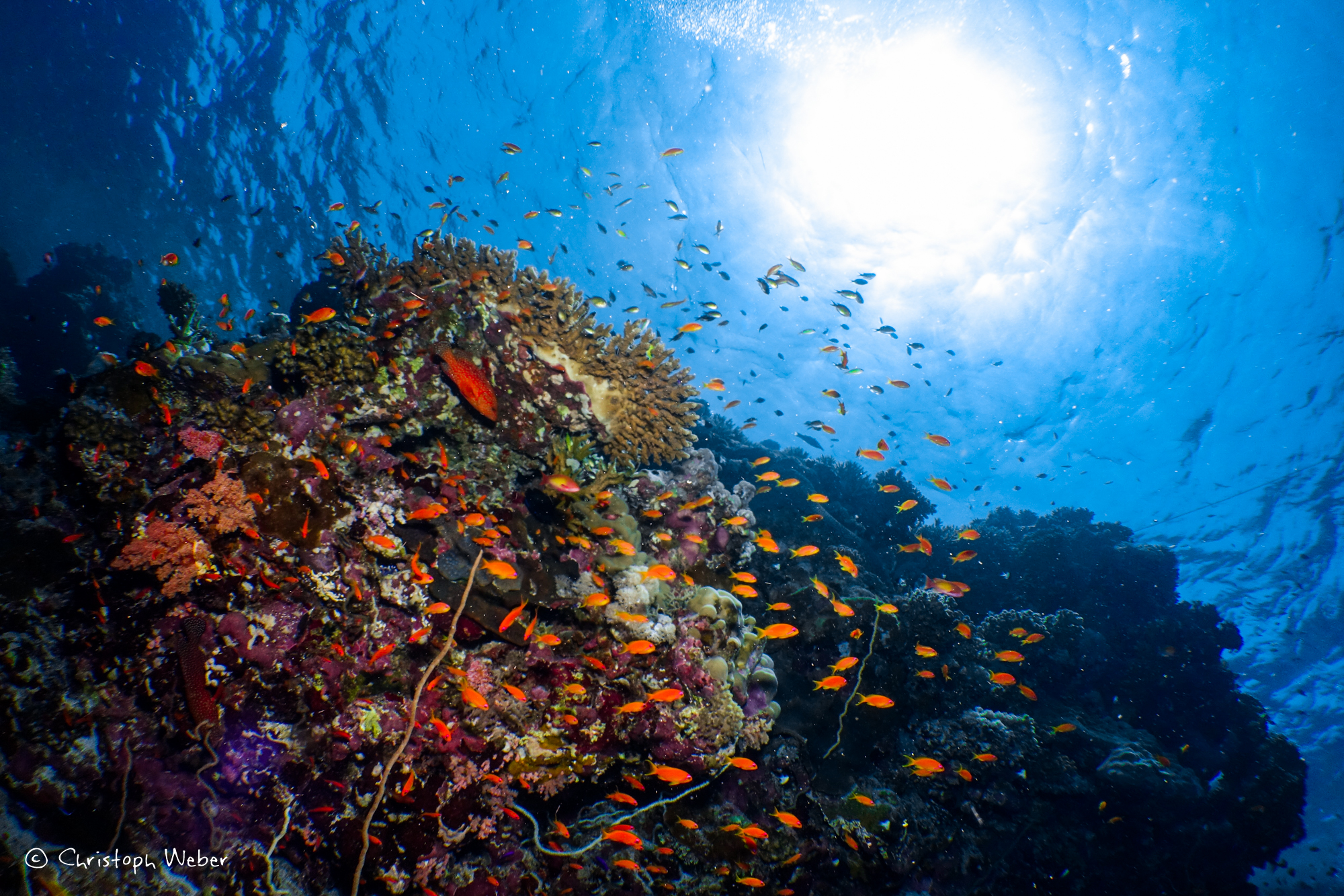 Sudanese Red Sea Reef