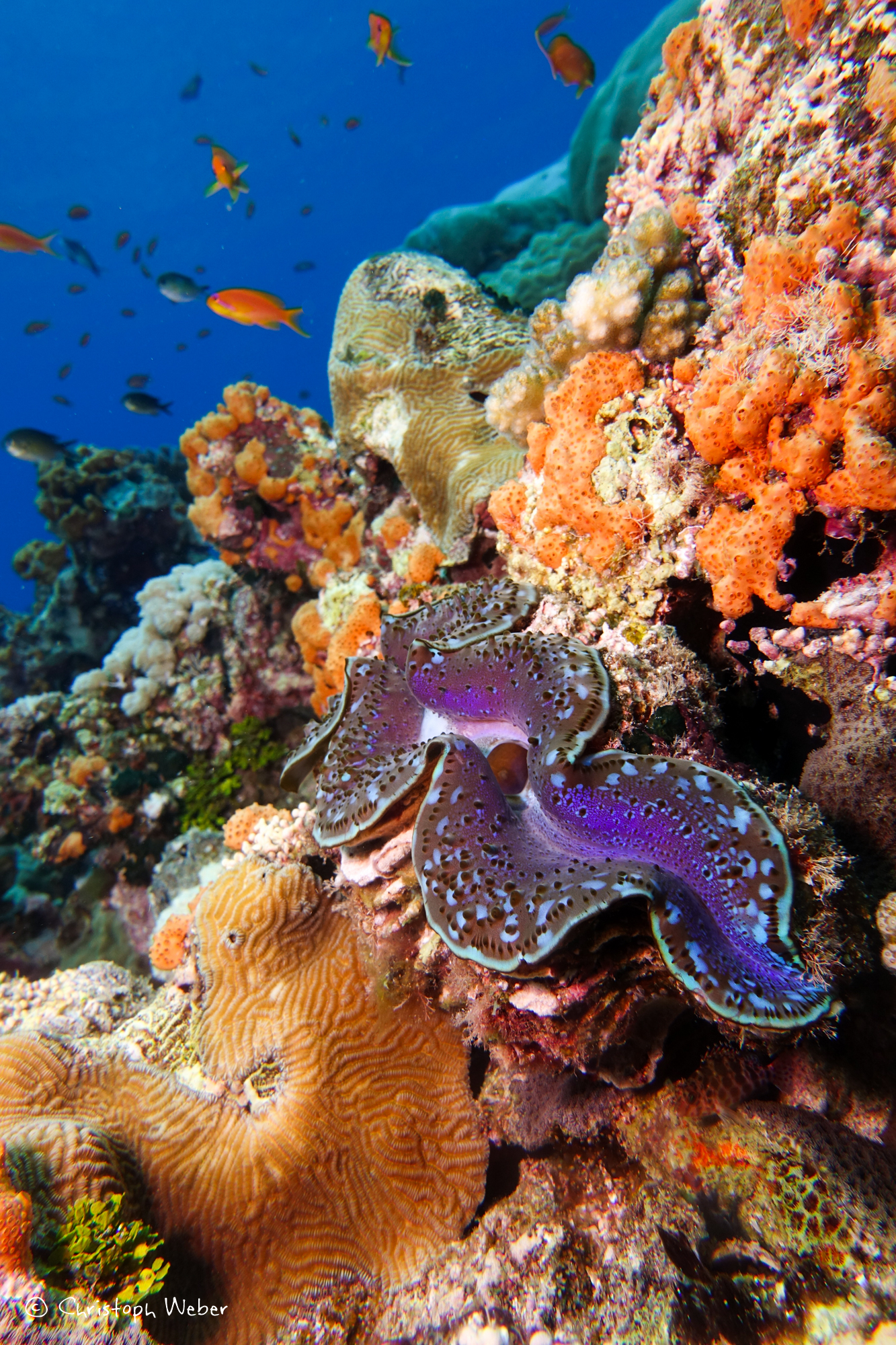 Sudanese reef colours