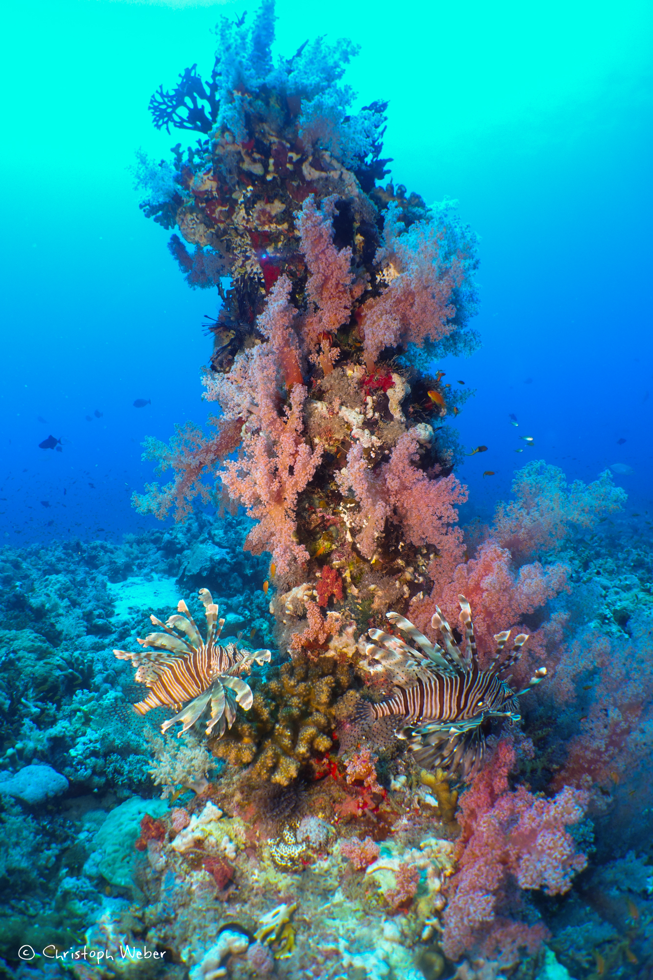 Underwater tower - Tower of coral with soft corals in Sanganeb